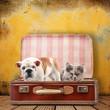 cuccioli in valigia