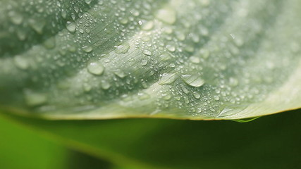 macro of a wet tropical leaf