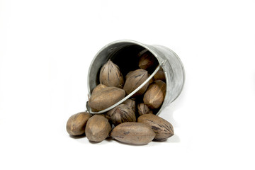 Overturned Bucket Spilling Freshly Picked Pecan Nuts