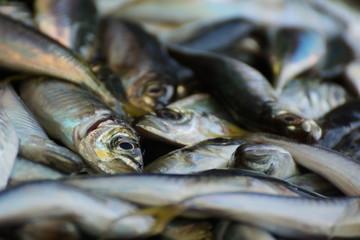 Ware auf dem Fischmarkt in IStanbul