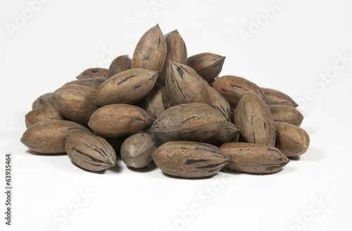 Random Pile of Newly Picked Pecan Nuts