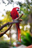 Red macaw parrot on a branch Kanvas Tablo