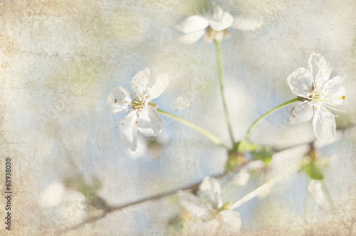postcard of spring bloom, vintage effect