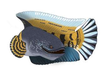Böser Fisch, Snakehead