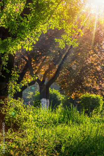 forest glade in sun light