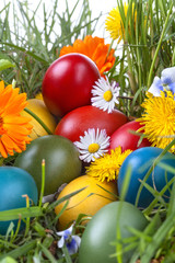 Easter eggs in the grass and flowers