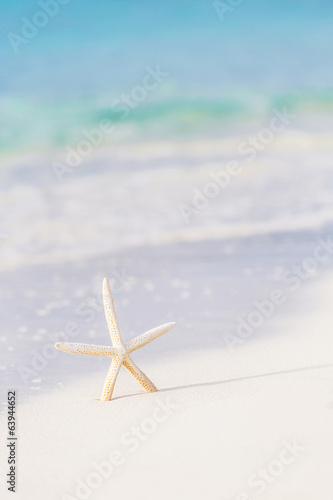 Cute sea star on seashore