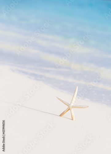 Cute little white sea star