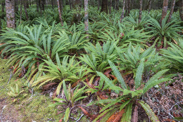 ferns growing in Fiordland National Park, New Zealand