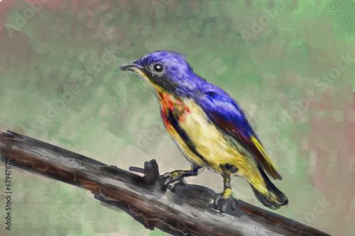 cg painting bird