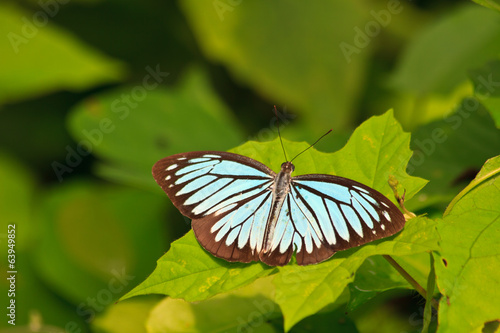 Beautiful Butterfly on leaf