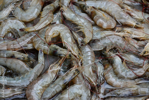 Fresh Shrimp   on the market for sale