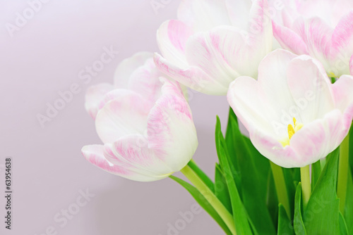 canvas print picture Tulpen
