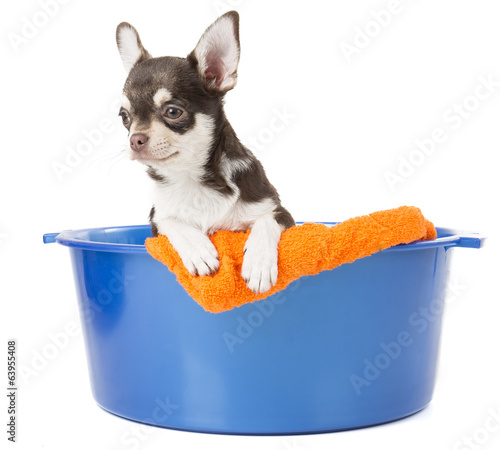 dog washes in a basin with foam