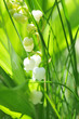 canvas print picture - Le muguet