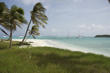 Saint Vincent and The Grenadines Tobago Cays Caribbean 40