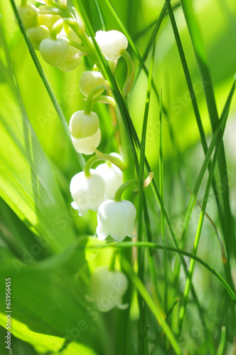 canvas print picture Le muguet