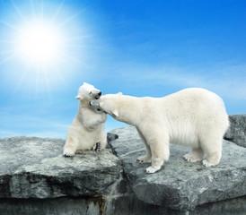 Eisbären beim Spielen