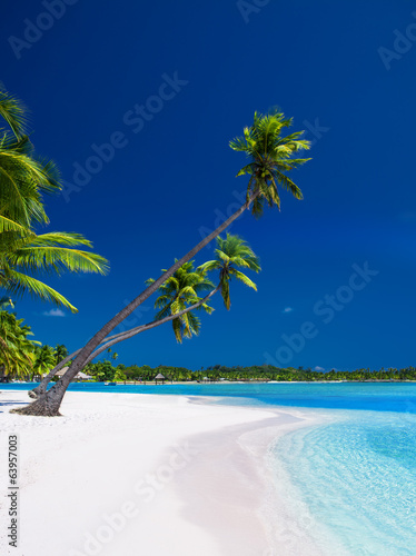 Palm trees hanging over lagoon with blue sky