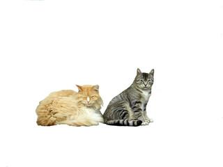 drowsy cats