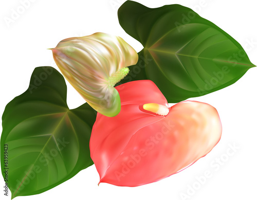 anthurium flowers and leaves illustration