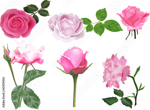 six isolated light pink roses