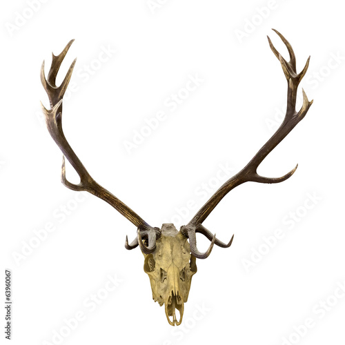 deer dark antlers with skull on white
