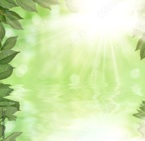 foliage with reflection on bright sunny background