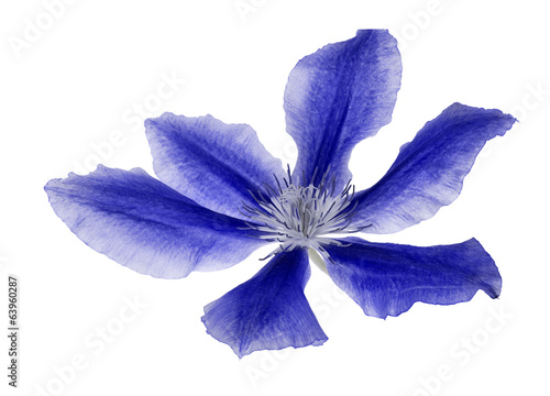 six petals blue flower on white