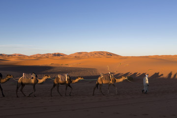 Camel caravan on the Sahara desert in profile against a bright b