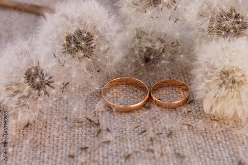 Wedding rings on the background dandelions