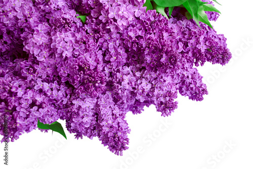 Deurstickers Lilac Syringa Lilac background