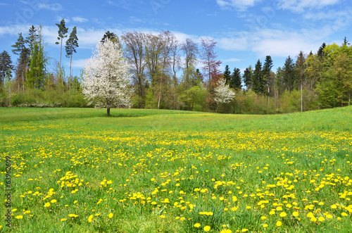 Beautiful spring meadow. Switzerland
