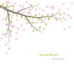 Spring branch background