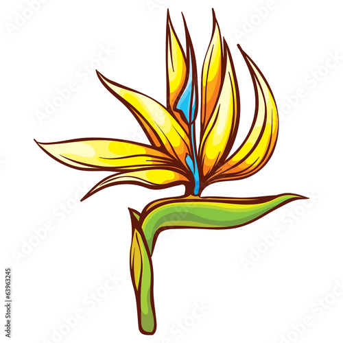 bird of paradise tropic flower exotic flora