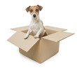 Dog inside the box package delivery