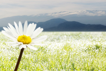 in front a flower and background mountains