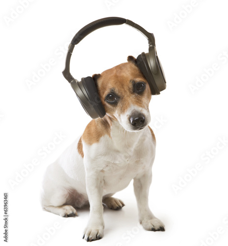 Dog music fan