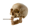 canvas print picture - Skull of the person with a cigarette.