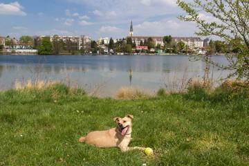 Ballspielen an der Alten Donau Wien