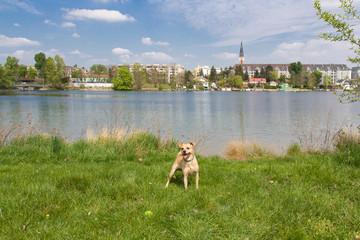 Wandern in Wien Floridsdorf
