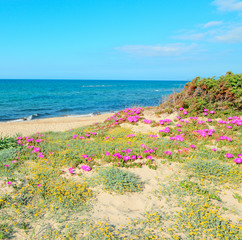 sand dunes and pink flowers