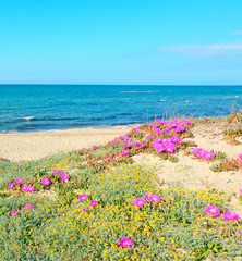 green dunes with flowers