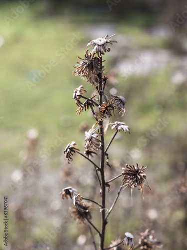 dry shrub on blurred background