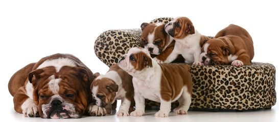 family of dogs