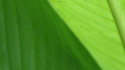 tropical leaves macro with copy space
