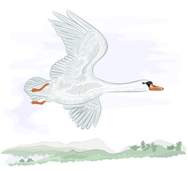 Flying high swan