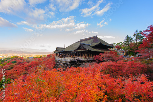 Foto op Canvas Japan Kiyomizu-dera stage with fall colored leaves
