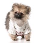 valentine's day puppy - 63970688