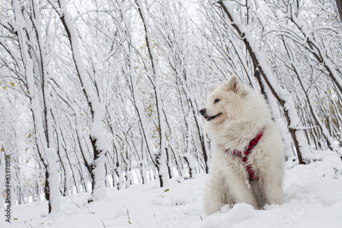 White dog in forest